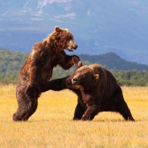 Nut Punching Bear