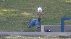 Guy Bench Pressing a Bird